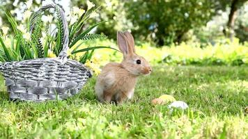 Cute rabbit in the garden