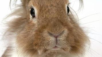 Close-up of a Rabbit