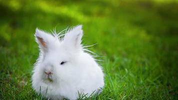 video di coniglio bianco all'aperto