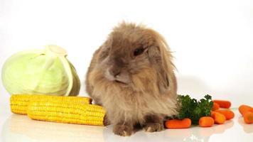 konijn met groenten op wit