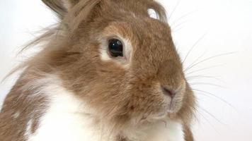 close-up de um coelho video
