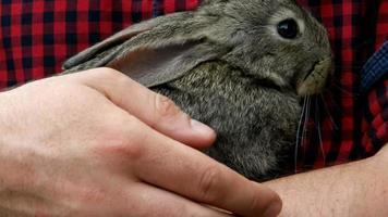 coniglio. animale nelle mani dell'uomo video