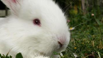 conejo esponjoso olfateando, cerrar