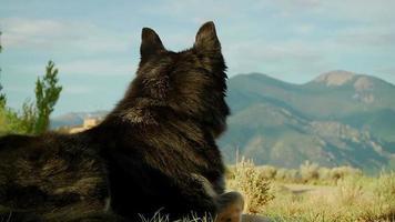 cachorro relaxando nas montanhas