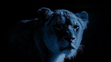 leoa ao luar