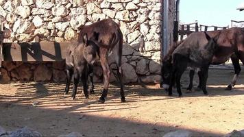 famille d'âne