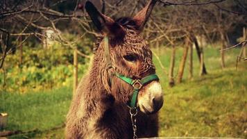 Beautiful donkey