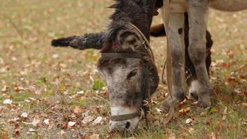 Two Donkeys Grazing video