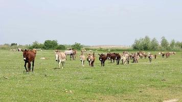 donkeys on field video