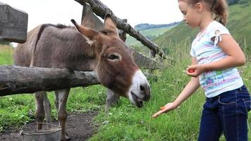 menina alimentando um burro. video
