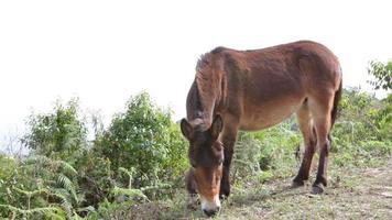burro em campo rural video