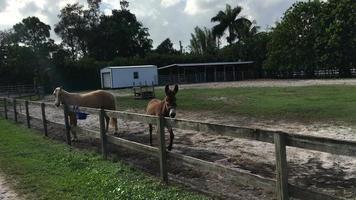 Esel und Pferd am Zaun