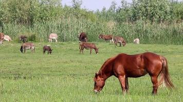 Pferd und Esel auf der Weide
