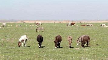 animales de granja burros y vacas
