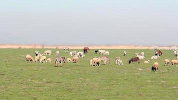 animais de fazenda no pasto video