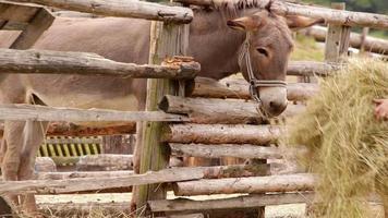 Imágenes de la granja: niño con sombrero de paja lleva una pila de heno al burro