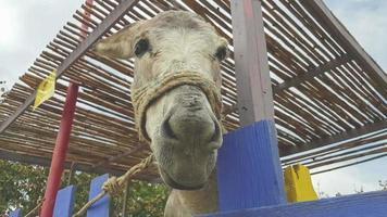 retrato engraçado de burro bonito em um parque.