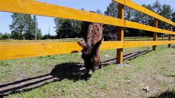 burro pastando en una valla de madera video