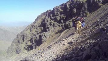 uma mula marrom-clara, com bolsas no caminho da alta montanha video