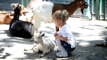 menina doce no zoológico com cabras video