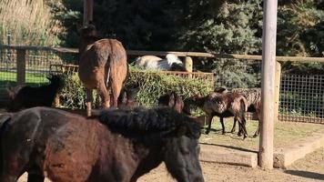 Farm animals video