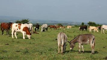 Bauernhof in der Natur video