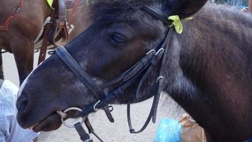cavalo pônei divertido, pelo que recebeu uma bronca do proprietário. burro parado na rua, agitando as orelhas e esperando um cliente montar. o cavalo está olhando em volta e piscando os olhos. câmera lenta, câmera lenta video