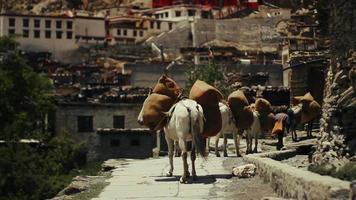 paardenkonvooi arriveert in het afgelegen Nepalese dorp Marpha, Nepal