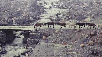paardenkonvooi over een brug in het afgelegen Mustang-district in Nepal.