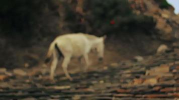 cavalo chegando ao portão de uma vila remota no distrito de mustang de nepal. video