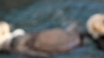 couple de phoques nageant en profitant de l & # 39; eau video