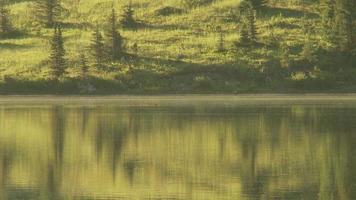 castor cruza o lago video