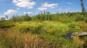 paesaggio con tracce di attività di castoro