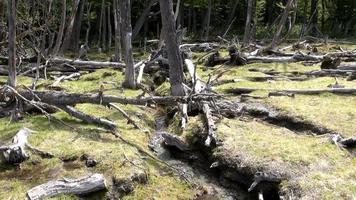danos ao meio ambiente e florestas video