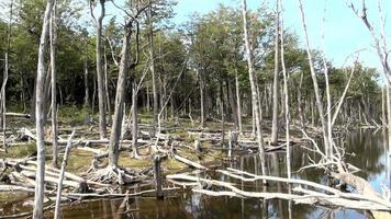 danni all'ambiente e alle foreste