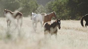 caballos corriendo en cámara lenta