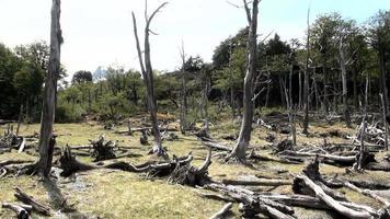 Umwelt- und Waldschäden