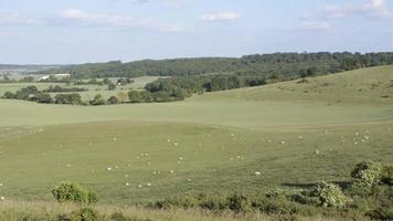 laps de temps des moutons au pâturage
