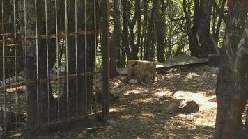 Grupo de cabras en corral en la granja video