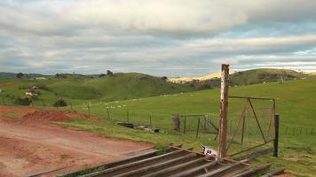 fazenda de ovelhas australiana video