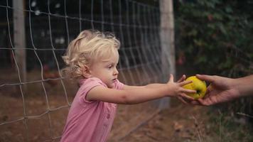 Ein süßes kleines Mädchen wirft einen Apfel in einen Ziegenstall