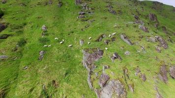 rebanho de ovelhas pastando em uma encosta íngreme, imagens aéreas video