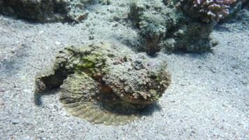 poisson pierre