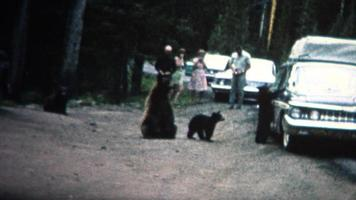 (8 mm vintage) 1968 pessoas alimentando ursos na estrada no parque de Yellowstone video