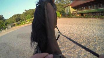 Caballo saltando valla al atardecer, punto de vista de gopro video