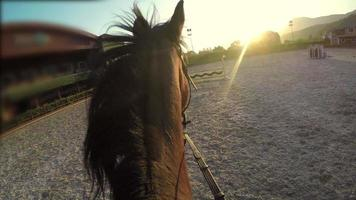 cavalo saltando obstáculo ao pôr do sol, ponto de vista gopro