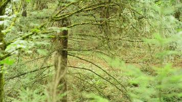 giovane ragazza a cavallo in una foresta