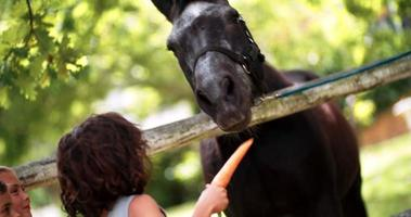 Little multi-ethnic boy feeding horse a carrot on farm video
