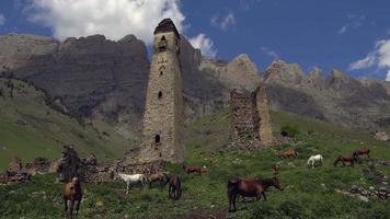 wilde Pferde, die Gras in den Bergen des Kaukasus essen