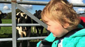 criança pequena na bicicleta do pai visitando vacas leiteiras video